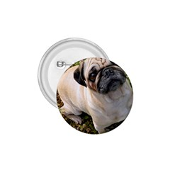 Pug Fawn Full 1.75  Buttons