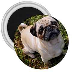 Pug Fawn Full 3  Magnets