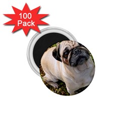 Pug Fawn Full 1.75  Magnets (100 pack)