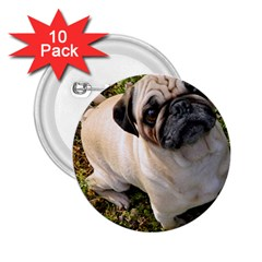 Pug Fawn Full 2.25  Buttons (10 pack)