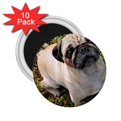 Pug Fawn Full 2.25  Magnets (10 pack)
