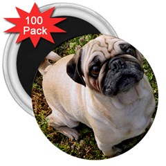 Pug Fawn Full 3  Magnets (100 pack)
