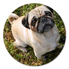 Pug Fawn Full Magnet 5  (Round)