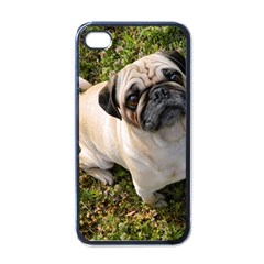 Pug Fawn Full Apple iPhone 4 Case (Black)