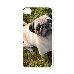 Pug Fawn Full Apple iPhone 4 Case (White)