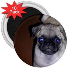 Pug Full 5 3  Magnets (10 pack)