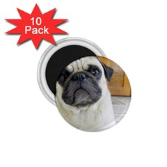 Pug Laying 1.75  Magnets (10 pack)