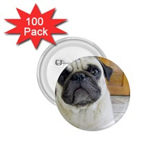Pug Laying 1.75  Buttons (100 pack)