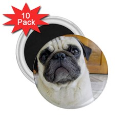 Pug Laying 2.25  Magnets (10 pack)