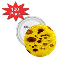 Beautiful Sunflowers 1.75  Buttons (100 pack)