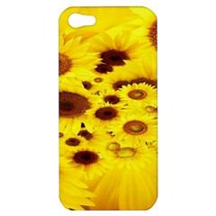 Beautiful Sunflowers Apple iPhone 5 Hardshell Case