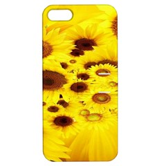 Beautiful Sunflowers Apple Iphone 5 Hardshell Case With Stand