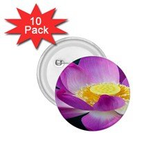 Pink Lotus Flower 1 75  Buttons (10 Pack)