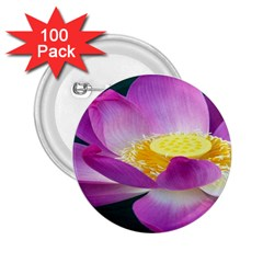 Pink Lotus Flower 2.25  Buttons (100 pack)