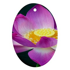 Pink Lotus Flower Oval Ornament (two Sides)
