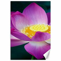 Pink Lotus Flower Canvas 12  x 18