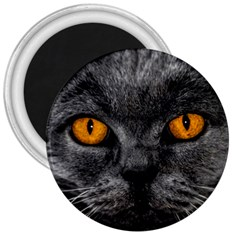 Cat Eyes Background Image Hypnosis 3  Magnets