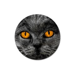 Cat Eyes Background Image Hypnosis Magnet 3  (Round)