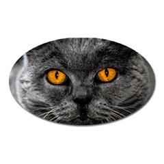 Cat Eyes Background Image Hypnosis Oval Magnet