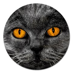 Cat Eyes Background Image Hypnosis Magnet 5  (Round)