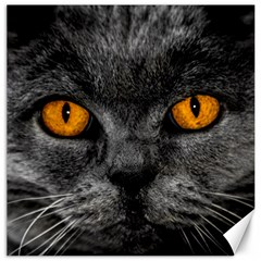 Cat Eyes Background Image Hypnosis Canvas 16  x 16