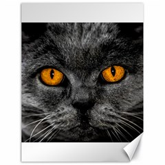 Cat Eyes Background Image Hypnosis Canvas 18  x 24