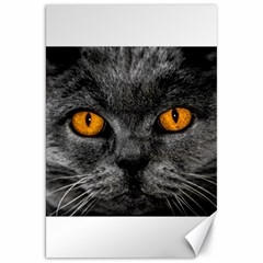 Cat Eyes Background Image Hypnosis Canvas 20  x 30