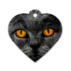 Cat Eyes Background Image Hypnosis Dog Tag Heart (two Sides)