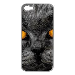 Cat Eyes Background Image Hypnosis Apple iPhone 5 Case (Silver)