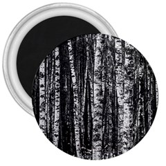 Birch Forest Trees Wood Natural 3  Magnets