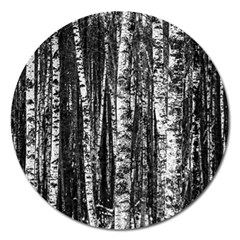 Birch Forest Trees Wood Natural Magnet 5  (Round)