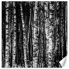 Birch Forest Trees Wood Natural Canvas 12  X 12