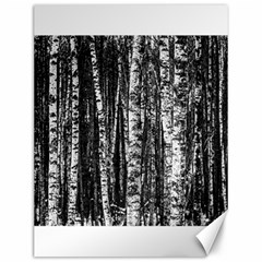 Birch Forest Trees Wood Natural Canvas 12  X 16