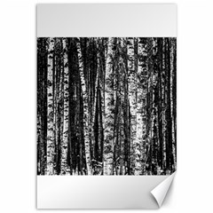 Birch Forest Trees Wood Natural Canvas 12  X 18