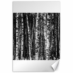 Birch Forest Trees Wood Natural Canvas 24  X 36