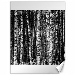 Birch Forest Trees Wood Natural Canvas 36  X 48