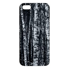 Birch Forest Trees Wood Natural Apple Iphone 5 Premium Hardshell Case