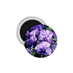 Purple Pansies 1.75  Magnets