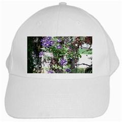 Purple Clematis White Cap