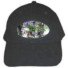 Purple Clematis Black Cap