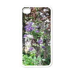 Purple Clematis Apple iPhone 4 Case (White)