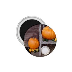 Pumpkins And Gourds 1.75  Magnets