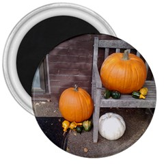 Pumpkins And Gourds 3  Magnets