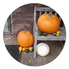 Pumpkins And Gourds Magnet 5  (Round)