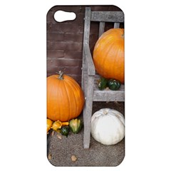 Pumpkins And Gourds Apple iPhone 5 Hardshell Case