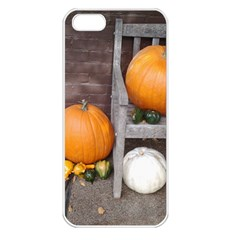 Pumpkins And Gourds Apple iPhone 5 Seamless Case (White)