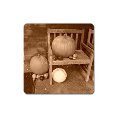Pumpkins And Gourds Sepia Square Magnet