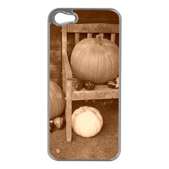 Pumpkins And Gourds Sepia Apple iPhone 5 Case (Silver)