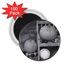 Pumpkind And Gourds Bw 2.25  Magnets (100 pack)