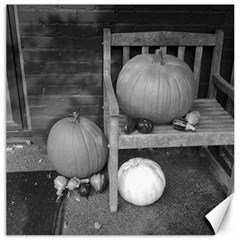 Pumpkind And Gourds Bw Canvas 16  x 16